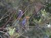 Greenexfarms , birding
