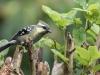 Greenexfarms , Wayanad, birding