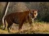 Greenexfarms - wildlife